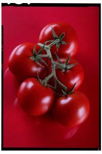 reklámfotó termékfotó syngenta paradicsom1